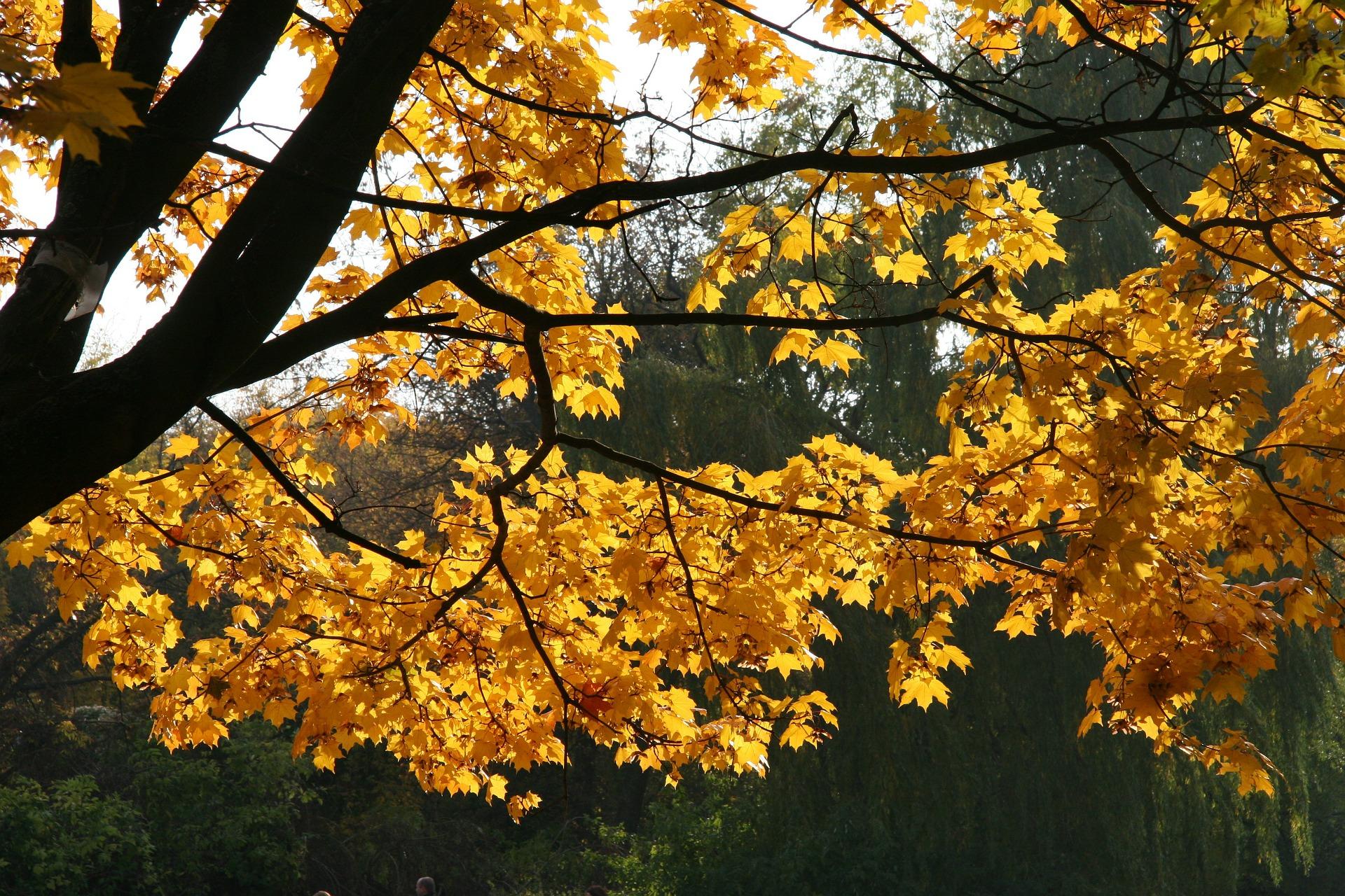co można robić jesienią w Warszawie