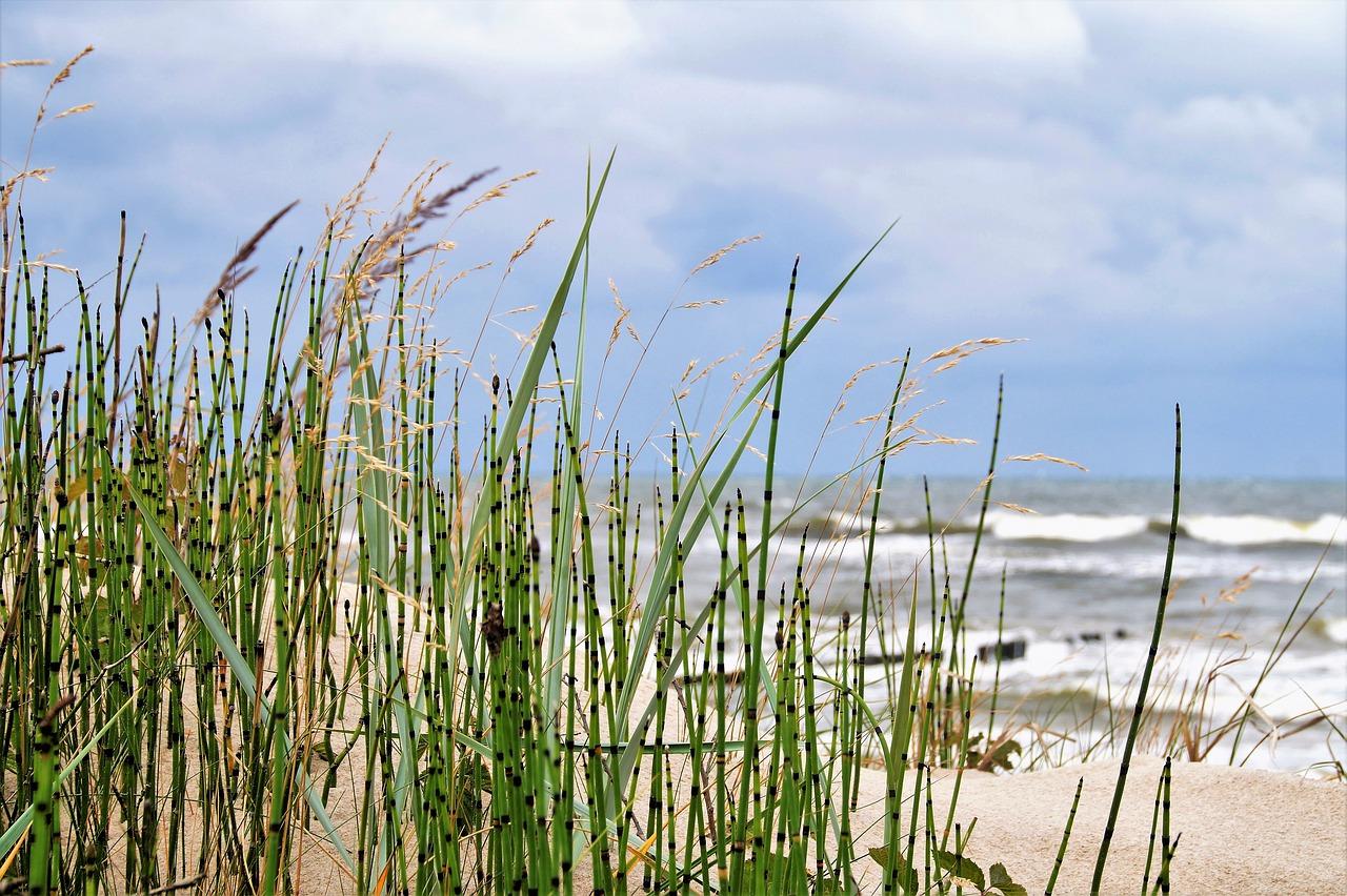 letnia lista wdzięczności morze